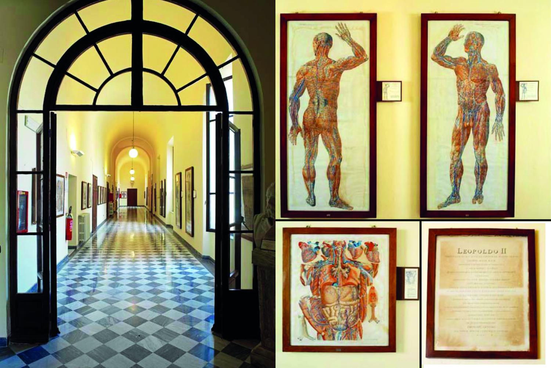 Interno museo di Anatomia Umana (Museo di Anatomia Umana)