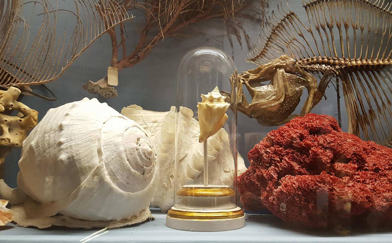 Museo Storia Naturale Camera delle Meraviglie (S. Battaglini)