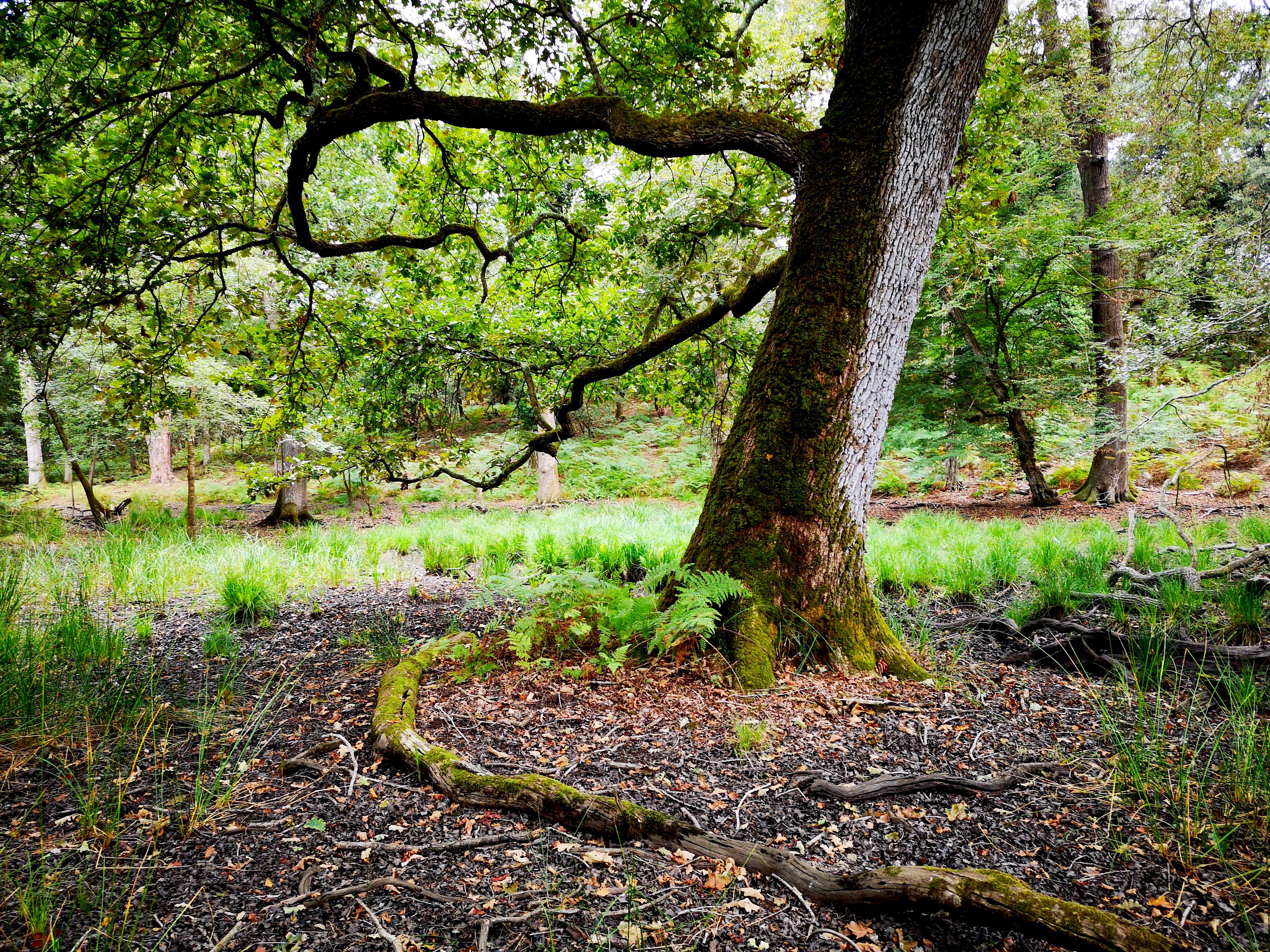 Foresta a San Rossore (Parco Naturale Migliarino, San Rossore, Massaciuccoli)