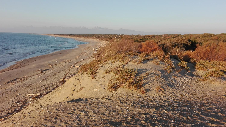 Spiaggia  (Parco Regionale Migliarino San Rossore Massaciuccoli)