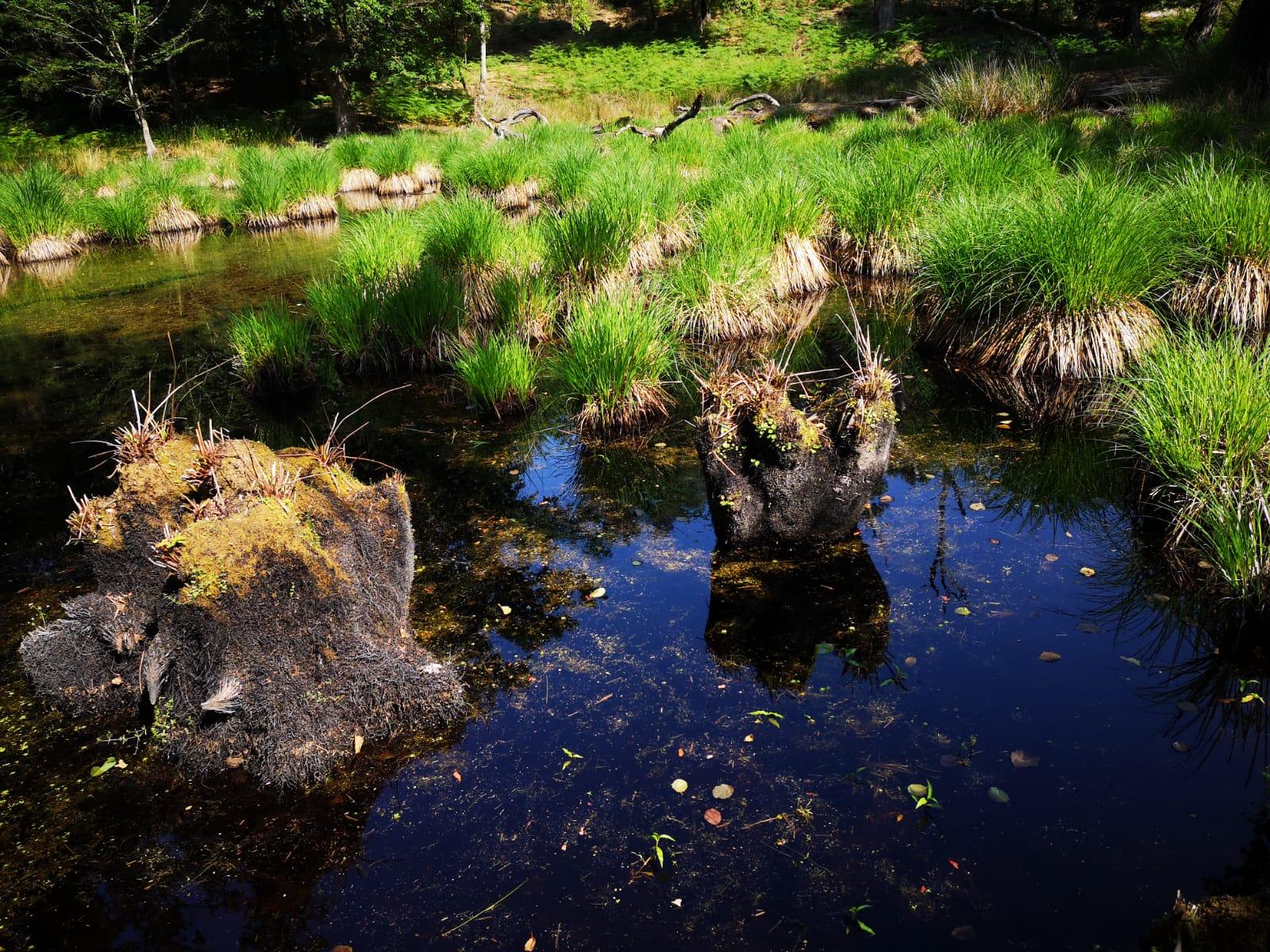 Riserva naturale Palazzetto (Parco Naturale Migliarino, San Rossore, Massaciuccoli)