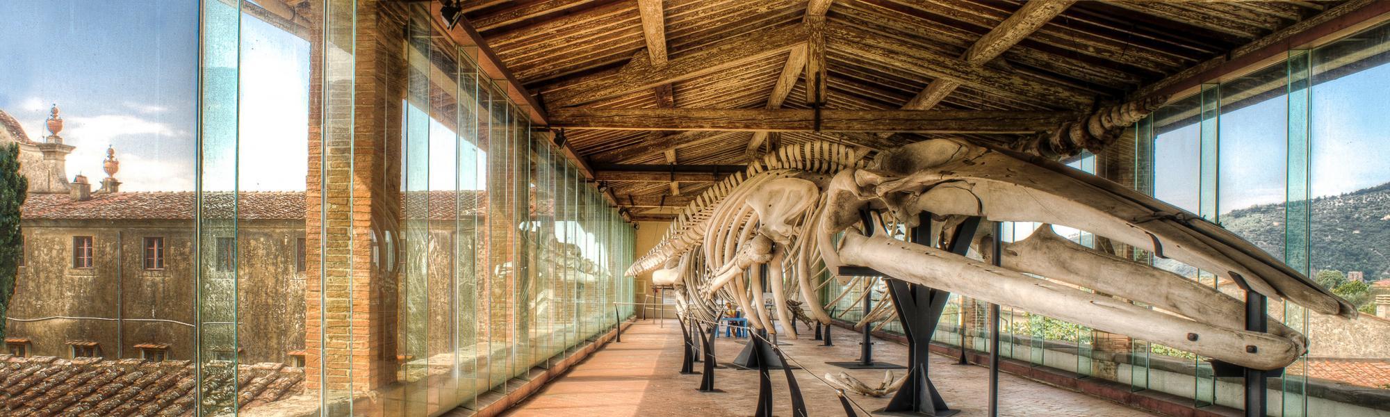 'La Galleria dei cetacei' Museo di Storia naturale (D. Battaglia)
