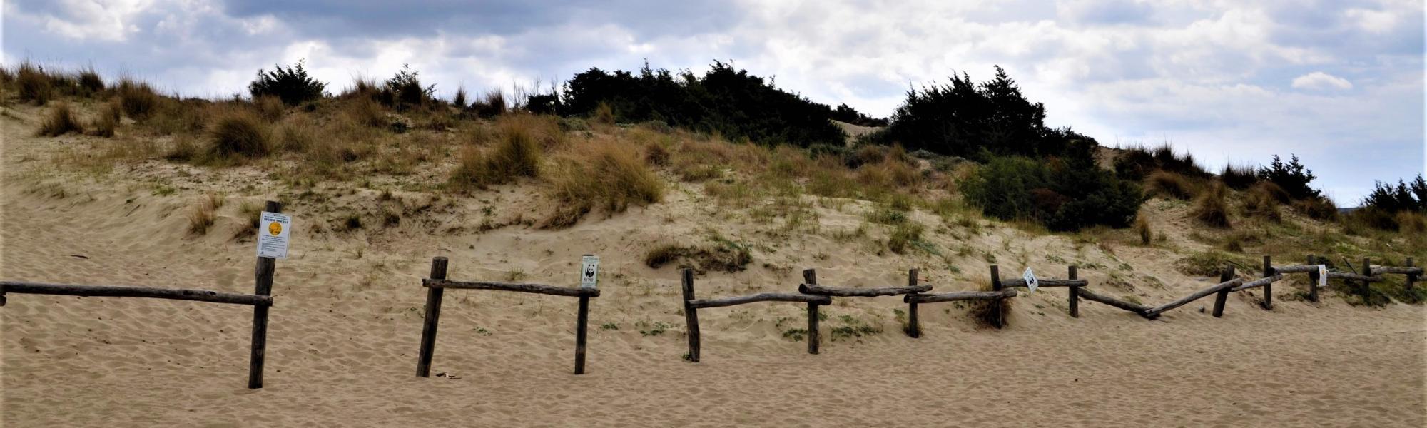Oasi WWF Dune di Tirrenia (L. Corevi, Comune di Pisa)