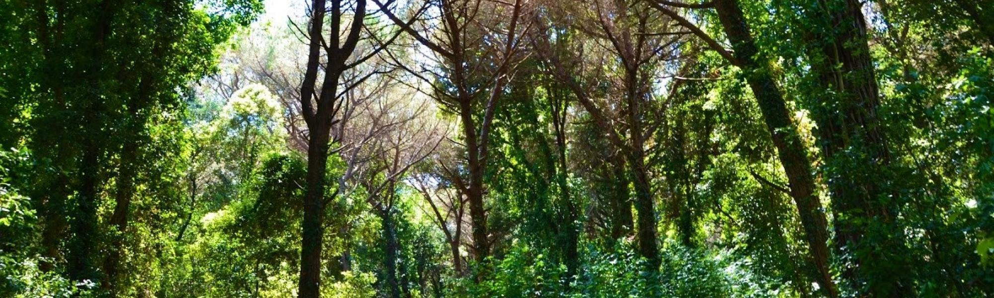 Interno pineta-bosco (L. Corevi, Comune di Pisa)