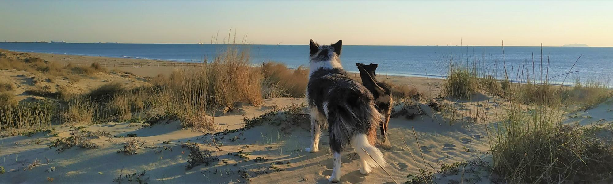 Spiaggia libera per cani (L. Corevi, Comune di Pisa)