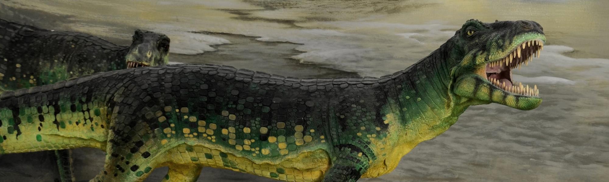 'Ticinosuco e limulo' Museo di Storia Naturale di Calci (S. Pozzuoli)