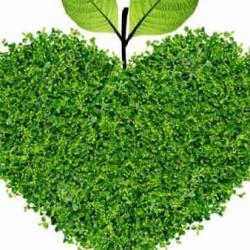 Green Romantic Cena Di San Valentino E Musica Live