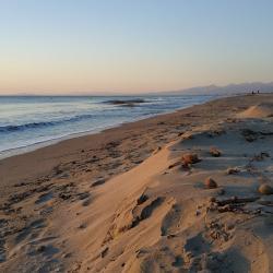 Dune di sabbia a Calambrone