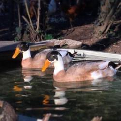 'Sorti e Dilì' animali dell'Ippooasi ( da www.ippoasi.org)